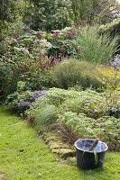 Densely planted, autumnal garden; bucket of gardening utensils in foreground
