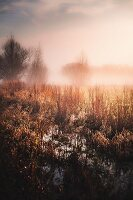 Marshy field and fog at dawn, Gloucestershire, England, UK