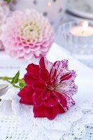 Bicoloured dahlia on lace doily