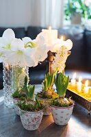 Christmas arrangement of white amaryllis in vase and hyacinths in floral pots