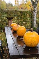 Pumpkins on wet wooden table in garden