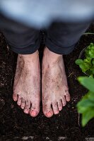 Woman's bare feet standing on bare soil between plants