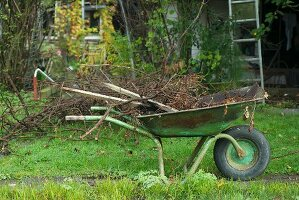 Wheelbarrow full of brushwood in garden