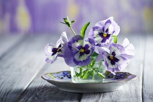 Violas in glass of water on plate