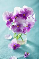 Purple violas in glass of water
