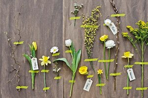 Arrangement of various spring flowers labelled and fixed to wall with washi tape