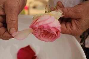 Plucking rose petals for natural beauty treatment