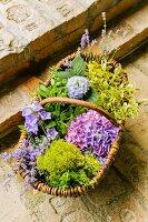 Weidenkorb mit Blumen und Wildkräutern