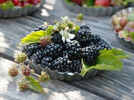Freshly picked blackberries in flan tin