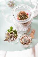 Verschiedene Kakteen in Gläsern als Minigewächshäuser