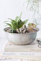 Eine alte Blechschüssel mit verschiedenen Kakteen bepflanzt