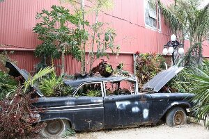 Disused car used as planter