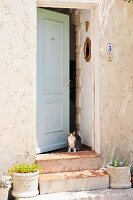 Cat standing in open front door