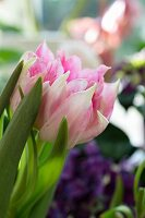 Detail of a bunch of pink tulips