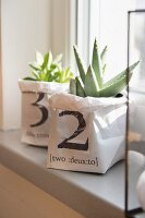 Succulents in hand-made, printed paper pot covers