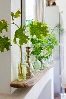 Stems of green leaves in glass vases on vintage wooden board