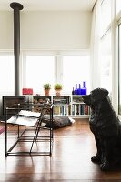 Black dog statue and slimline metal chairs in front of shelves and log burner below bank of windows