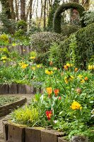 Flowering tulips and crown imperials in spring garden