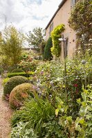 Plant support and clipped box balls in flowering garden outside manor house
