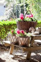 Baskets of pink hyacinths on picnic set