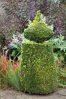 Topiary box bush in autumnal garden