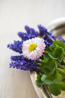 Grape hyacinths and daisy on silver tray