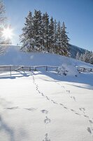 Animal tracks in snow below sunny sky