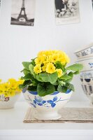 Yellow primula in vintage bowl in front of postcards