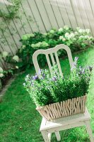 Purple-flowering plants in square planter on vintage chair in summer garden