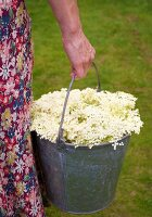 Bucket of elderflowers