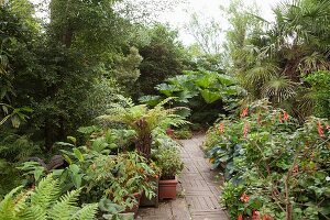 Garden path leading between herbaceous borders; ferns, flowering plants and palm trees in summer garden