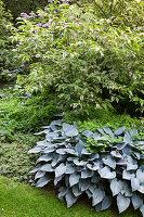 Various foliage plants in garden