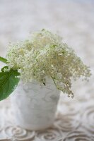 Elderflower umbel in vase