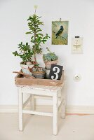 Mediterranean arrangement of succulents in terracotta pots on white vintage stool below vintage-style picture of bird on wall