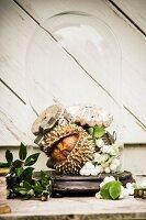 Christmas arrangement of chestnut, snowberries and kermes-oak acorns under glass cover