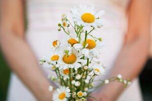 Posy of white chamomile
