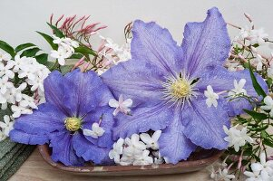 Purple clematis and jasmine flowers in bowl