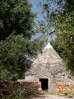 Tumbledown Apulian trullo behind stone walls under old olive trees