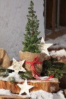 Small conifer in plant pot wrapped in hessian