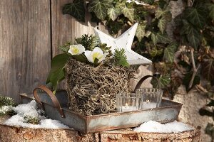 Plant pot wrapped in lichen on tin tray