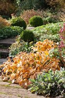 Path leading through herbaceous borders in autumnal garden