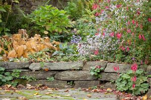 Small drystone wall in autumnal garden