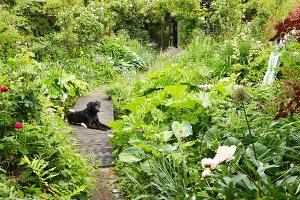 Dog lying on path in lush summer garden