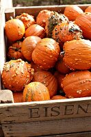 Knucklehead pumpkins in wooden crate