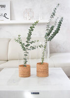 Glass vases decorated with cork sheets