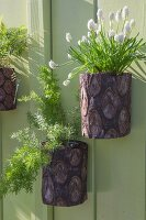 Grape hyacinths and asparagus fern in planters hung on green board wall