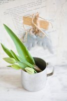 Tulips buds in zinc mug against wall papered with book pages