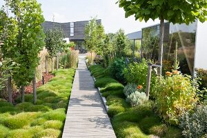 Long wooden walkway leading through garden planted with ground cover and perennial plants