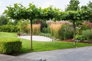 Young trees, lawn and herbaceous border in garden
