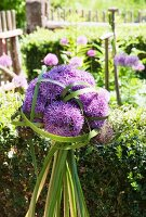 Arrangement of alliums and rushes in front of box hedge in garden